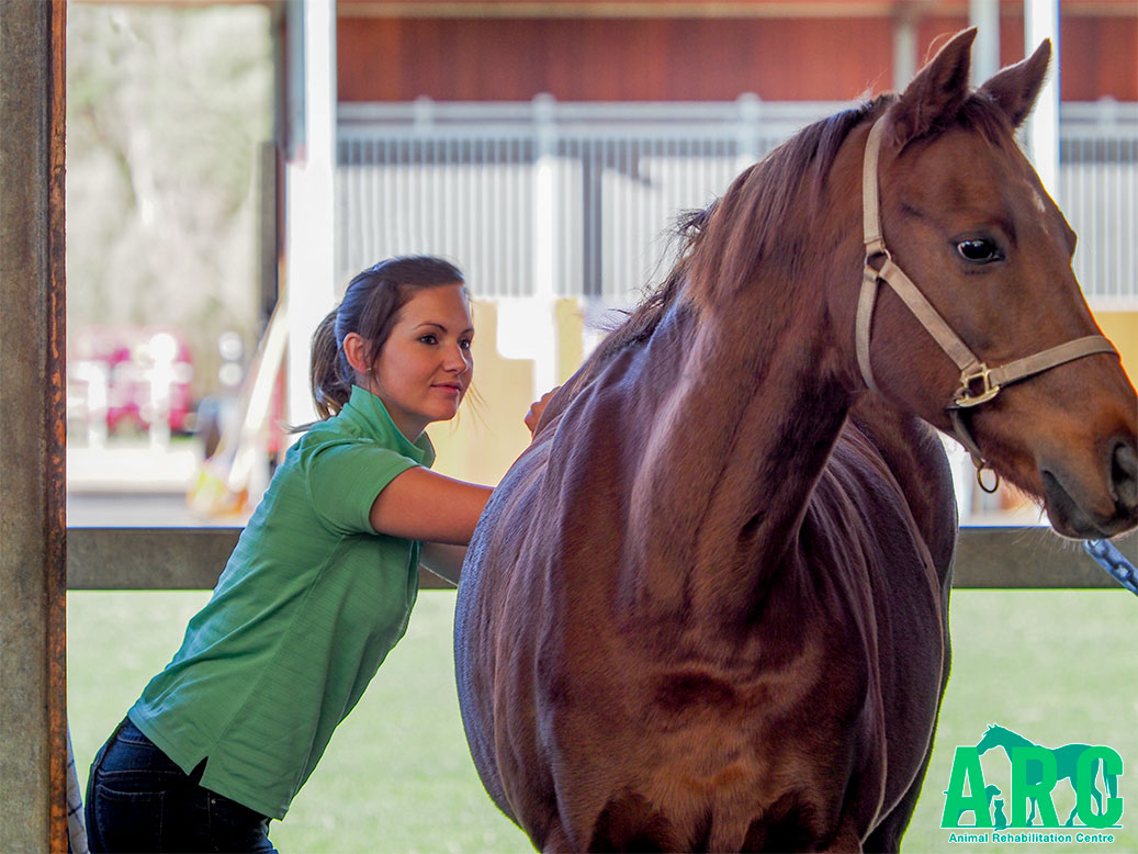 Equine Physiotherapy with Mel from ARC