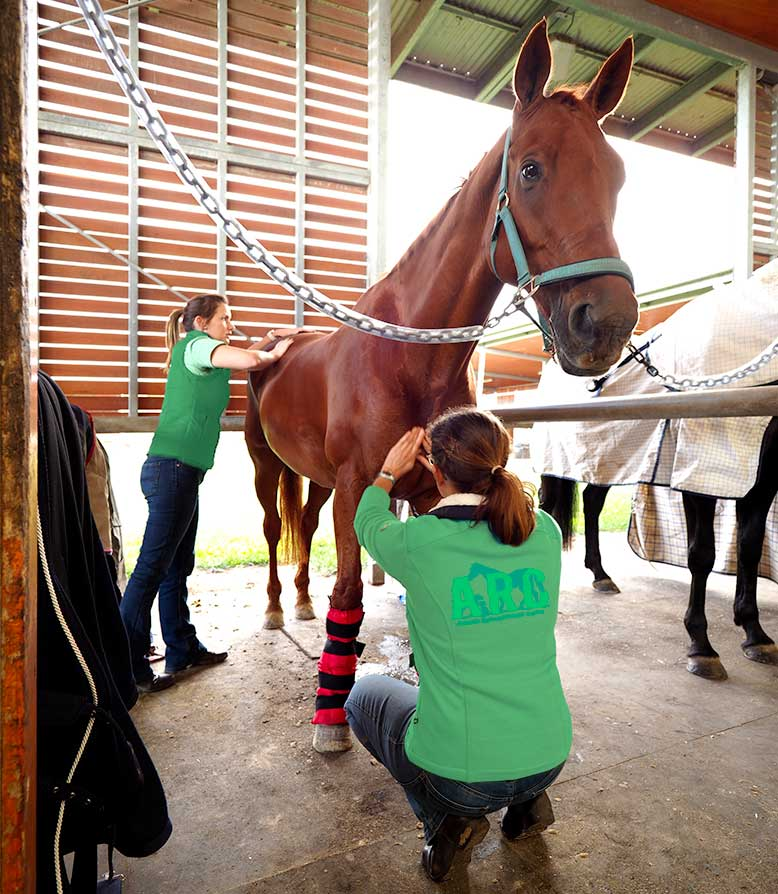 Equine Physiotherapy with Mel and Jodie from ARC
